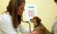 VETERINARY CLINICS